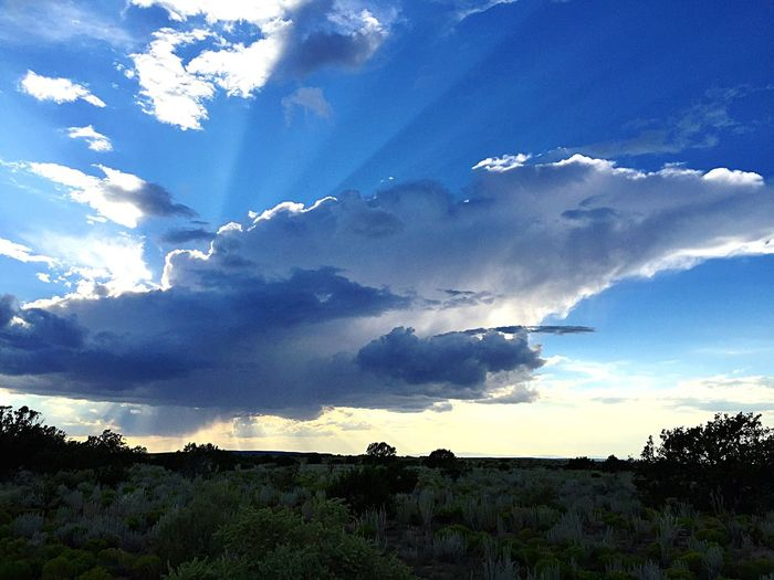 """""""Translucent Dreams"""" Dream clouds over The Central Highlands of New Mexico, USA. Landscape Tranquil Scene Scenics Tranquility Beauty In Nature Sky Blue Cloud - Sky Nature Rural Scene Heaven Newmexicophotography Newmexico Newmexicoskies Translucent"""