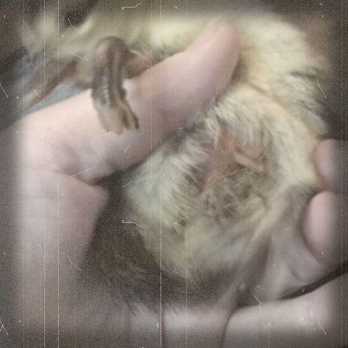 Ducklings Perfectly Imperfect Deformity Eye Em Nature Lover Poor Baby