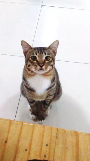 I want food 😍😍Cat Cateyes Bekasi Pet Portraits
