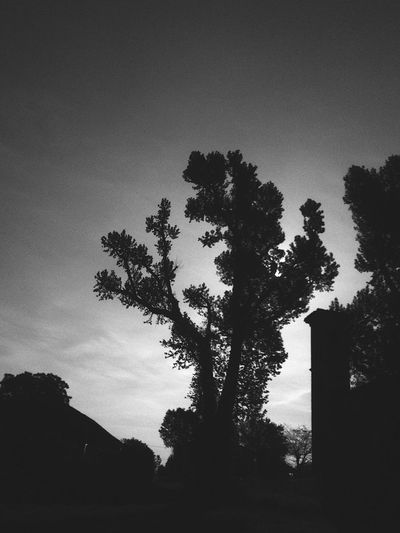 839 Tree Silhouette Growth Nature Sky No People Low Angle View Outdoors Tranquility Beauty In Nature Day Landscape Clear Sky Streetphotography Minimalism EyeEmNewHere Thegreatoutdoors-2017EyEmawards Monochrome