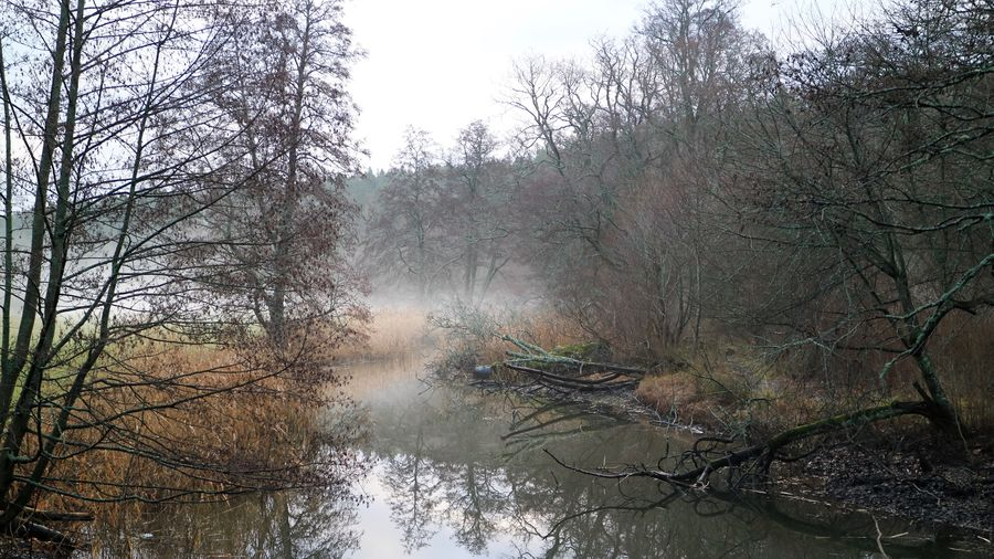 Misty Tree Plant Water Nature No People Growth Sky Fog Tranquil Scene Tranquility Outdoors