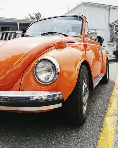 Juicy Beetle
