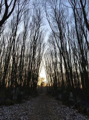 Sunset_collection Treetops Cemetery Horizon Lotti On Tour