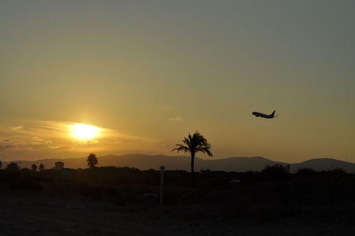Sunset Nature Sky Beach Platja ElPrat Flying Palm Tree