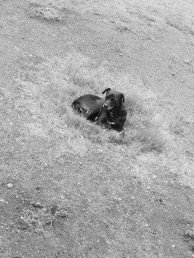 Dog Love Dog❤ Dogs Of EyeEm Dog Photography Pets Dog Sand Beach High Angle View Young Animal