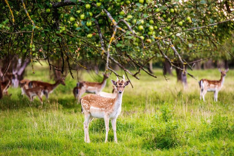 Young deers standing on field against trees