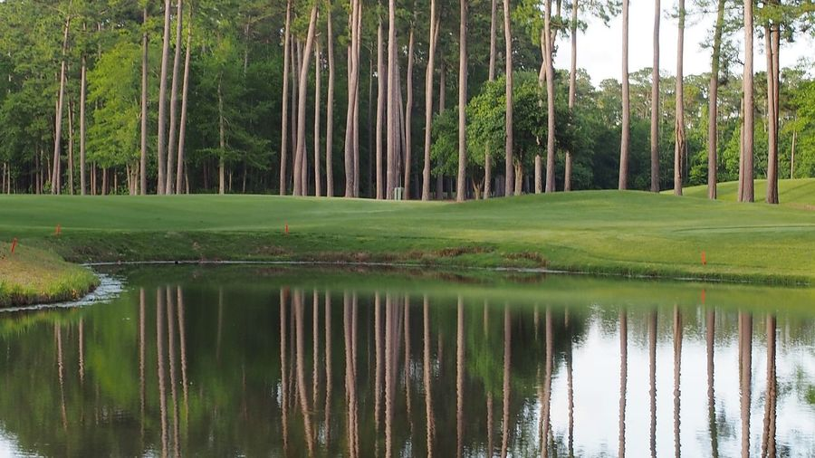 pine tree reflections in water Bradley Olson Bradleywarren Photography Room For Text Room For Copy Copy Space Copyspace Backgrounds Background Tree Golf Course Green - Golf Course Water Bamboo - Plant Forest Lake Tree Trunk Reflection Pinaceae Pine Woodland Coniferous Tree Needle - Plant Part Putting Green Pine Tree Pine Wood Lush - Description WoodLand Tree Area Lush Foliage Evergreen Tree Golf Pine Cone