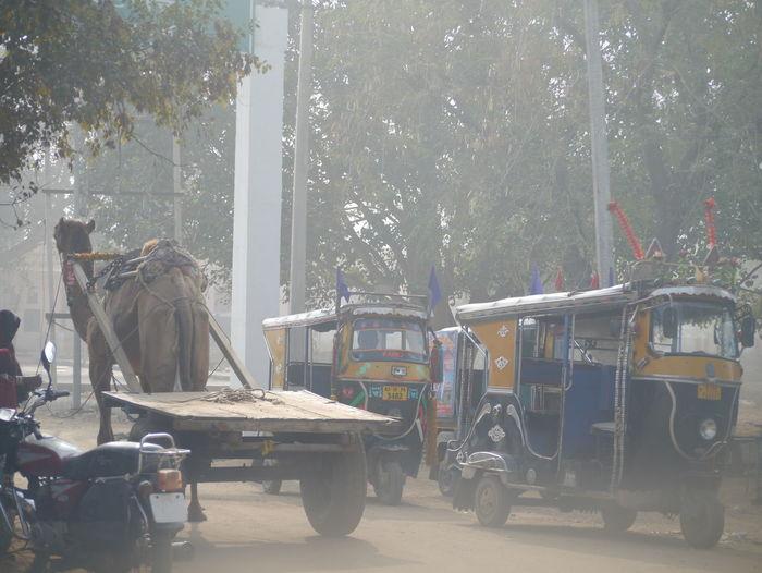 City Life Day Empty Mandawa Mandawa, Rajasthan Mode Of Transport Outdoors Parked Parking Stationary Transportation Tree