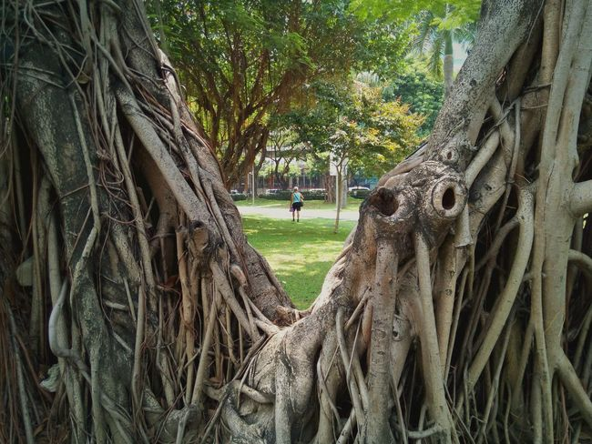 Tree Day Field Outdoors Real People Nature Tree Trunk Grass One Person People Only Men Makati, Philippines Lifestyles Relaxation Green Color Makati Triangle