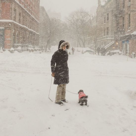 Blizzard 2016 NYC Winterstormjonas Stormjonas Walking The Dog ColumbusAve