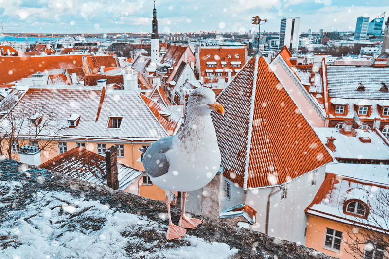 Snow covered buildings in city with seagull