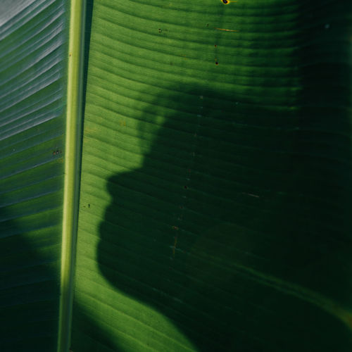 Full frame shot of green leaf with shadow
