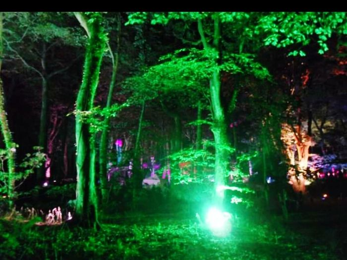 Gotwood Colorful Nature A Walk In The Woods Housemusic Festival