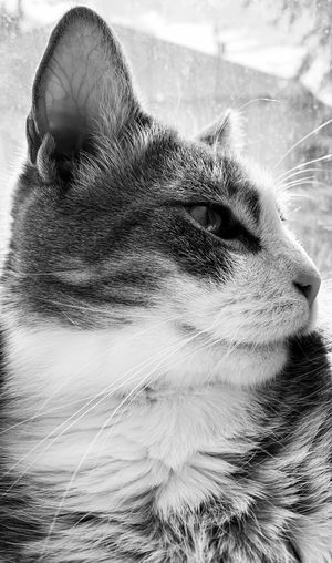 Close-up Portrait Body Part One Person Headshot One Animal Real People Mammal Domestic Animals Whisker