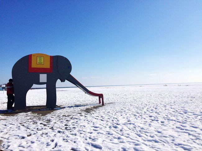 Winter Winter Beach Snow Elephant Nature Outdoors Seaside Estonia Pärnu Cold Cold Temperature