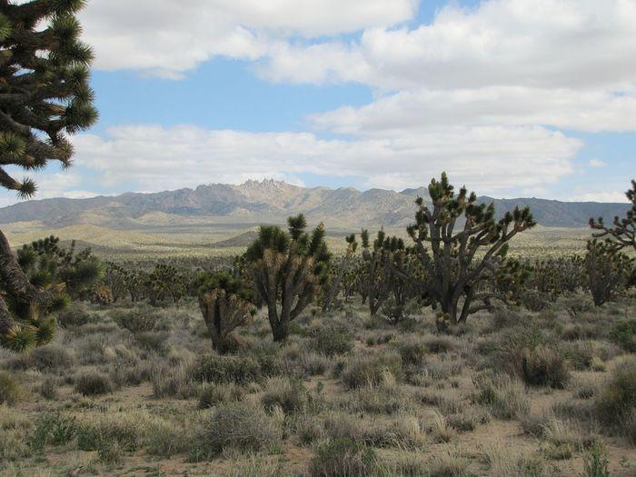 Mojave Desert Mojave National Preserve Joshua Tree California Deserts Around The World Desert Landscape Desert Beauty The Great Outdoors - 2016 EyeEm Awards