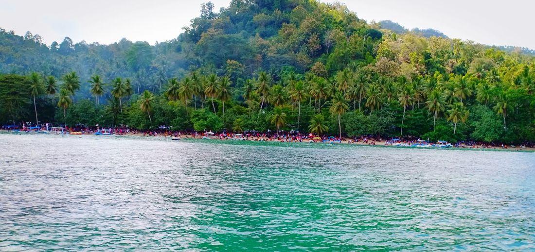 Karanggongso Beach Beachphotography Beach Sea Landscape Politics And Government Pinaceae Sky