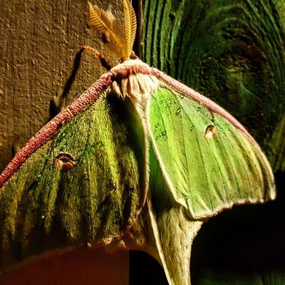 Hanging Out Taking Photos Check This Out That's Me Hello World Cheese! Relaxing Hi! Enjoying Life Lunar Moth