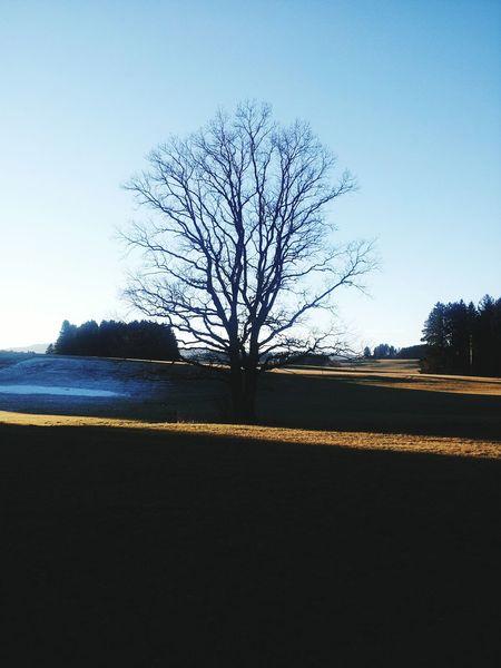Baum Tree Germany Wiese  Sky Himmel Wolken Cloud Schnee Snow Schatten