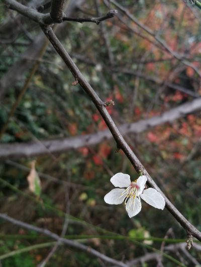 Nature Branch Twig Flower Tree Plant Growth No People Day Outdoors Beauty In Nature Close-up Fragility Burgazada