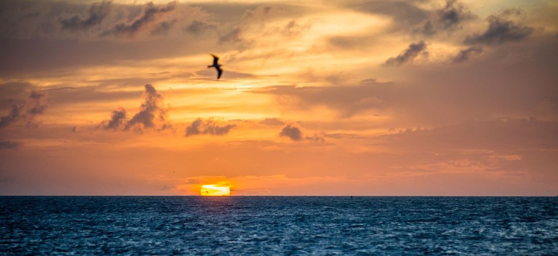 Florida Sunset Beach Bird Sky Nature Horizon Over Water Tranquil Scene Beauty In Nature Sea Outdoors No People Tranquility Water Scenics Landscape