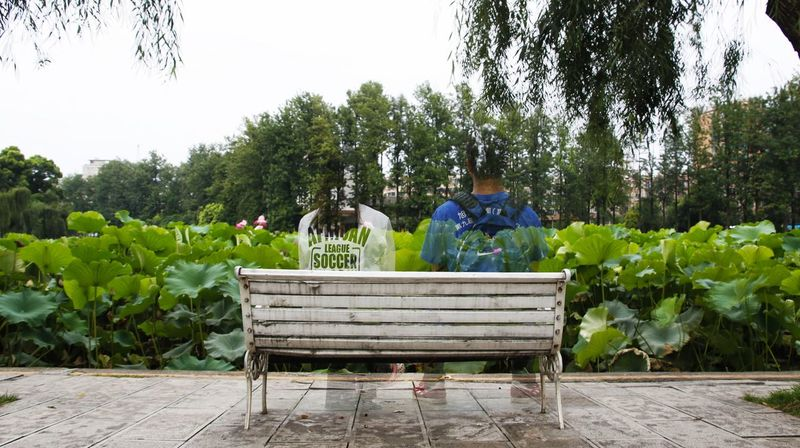 只是回忆. Plant Bench Seat Tree Nature Day Sitting