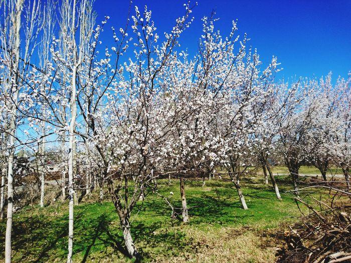 Bahar çiçekleri Iğdır Beauty In Nature