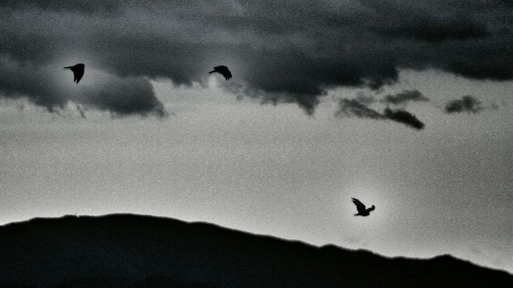 今朝はロマンチックだったのに…………午後に入って暗黒面に墜ちたかな?σ(^◇^;) ダーク部 Nature On Your Doorstep Eyeem Best Shots - Silhouette シルエット部 Clouds Silhouettes Silhouette Black And White Birds Sky And Clouds