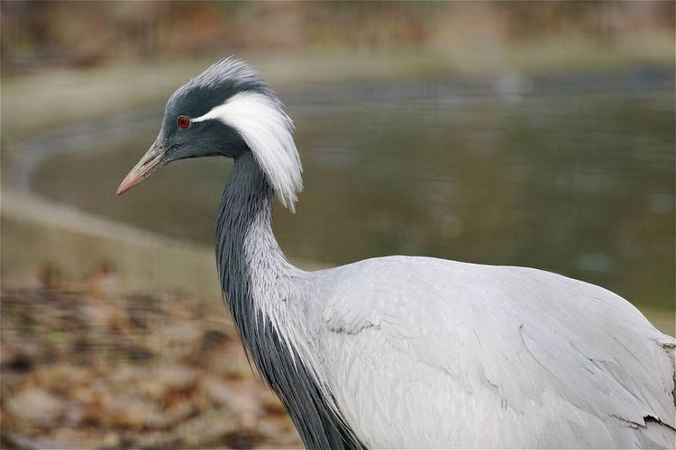 Close-up of crane at lakeshore