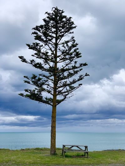 Tree on bench by sea against sky
