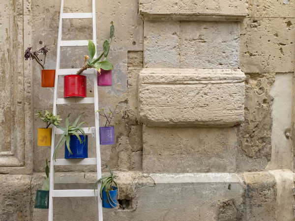 White stepladder with plants Architecture Art Background Box Bucket Building Exterior Built Structure Colorful Decoration Design Detail Exterior Flower Green Greenery Hanging Ladder No People Outside Plants Rustic Vase Wall - Building Feature White Wooden