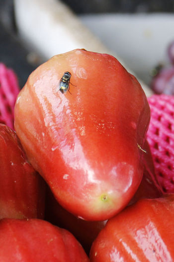 Close-up Flowers Fly On A Fruit Fly On A Red Jambu Freshness Juicy Macro Nature Red Red Red Fruit Red Jambu Tropical Tropical Fruit