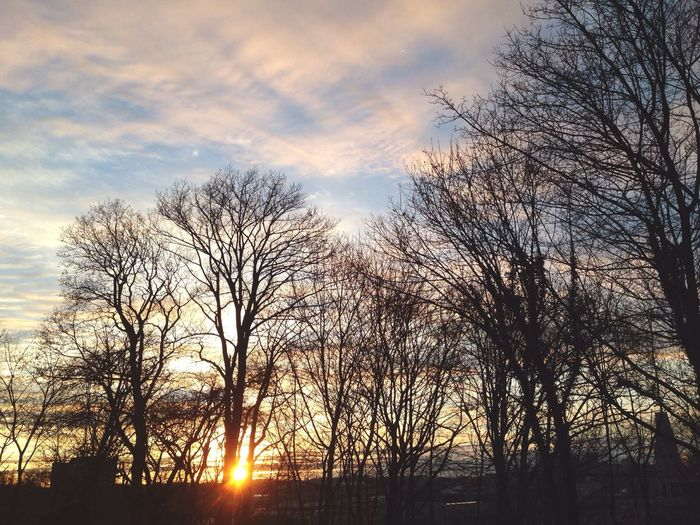 Dying sun. Open Edit Sunset Trees Pittsburgh Walking Around Neighborhood Enjoying Life Relaxing
