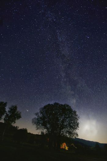 Silhouette trees on mountain against star field at night