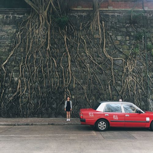 People And Places Trees Roots Roots Of Tree Taxi Urban City Street Old