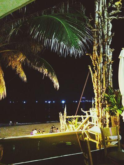 Night Palm Tree