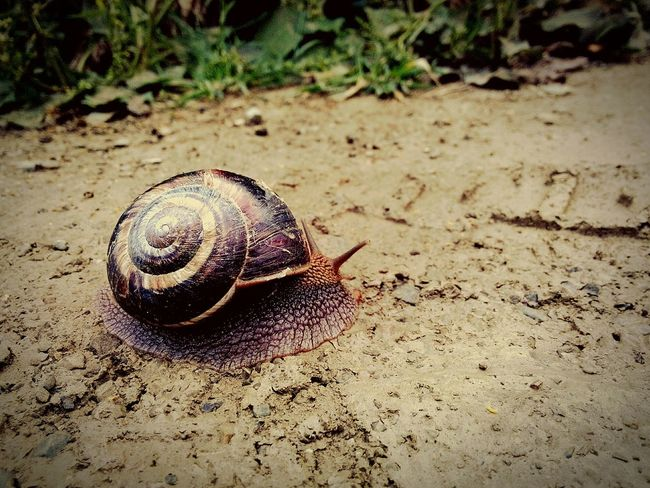 Nature Salyangoz Streetphotography Perfect Photography Taking Photos Turkey Istanbul Turkey Snail Perfect Day Makro Perfect Moment Photooftheday Photoshoot Photo Insect Böcek Insects  Insect Photography Macro Macro_collection Beuty