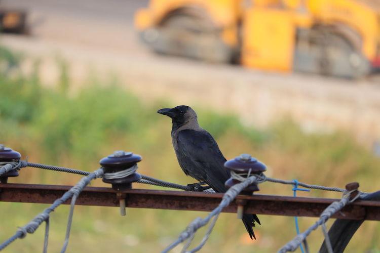 Bird perching on metal railing