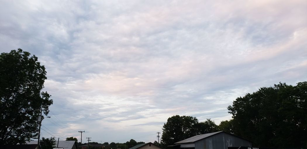 Tree City Sky