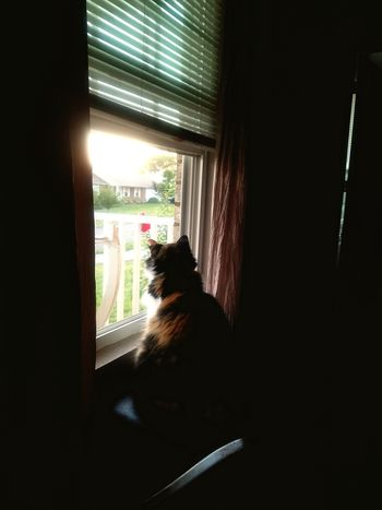 Early morning Bird watching Window Indoors  Pets One Animal Domestic Cat Home Interior Door Animal Themes Domestic Animals No People Mammal Curtain Day Sitting