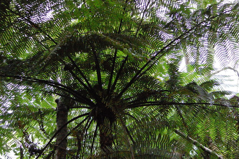 Tree Plant Growth Palm Tree Tropical Climate Low Angle View Beauty In Nature Nature Green Color Leaf No People Tree Trunk Tranquility Trunk Branch Day Plant Part Outdoors Sky Forest Palm Leaf Treetop Tree Canopy  Tropical Tree Rainforest