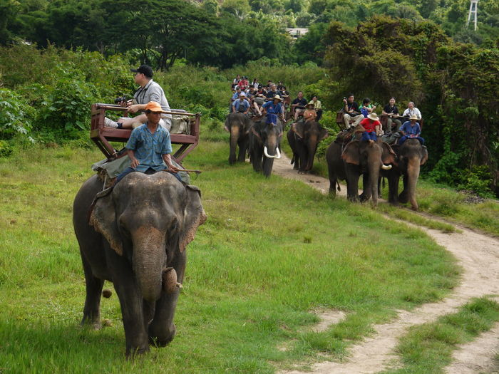 Animal Animal Themes Animals In The Wild Balance Day Domestic Animals Elephant Escapism Friendship Full Length Livestock Mammal One Animal Recreational Pursuit Side View Standing Togetherness Traveling Traverler Two Animals Wildlife Zoology