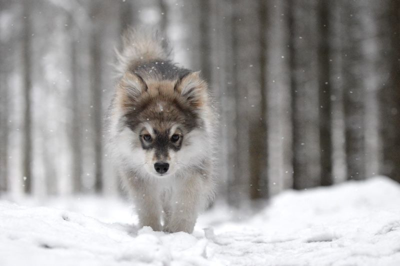 Portrait of an animal on snow covered land