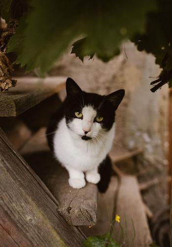 Portrait of cat sitting on wood