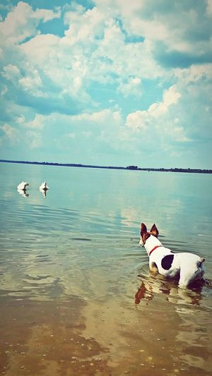 LUCY at Ingall's Harbor in Decatur, Alabama...exploring the river bank and meeting new faces! Ha..River Enjoying The Sun Exploring Outdoors Pets Pet Love Dog Life Ducks