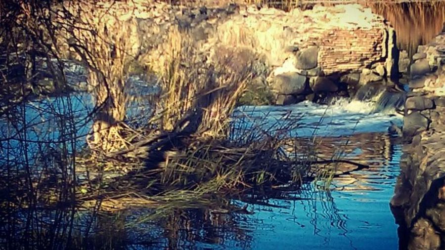San Diego Nature Beautiful View Beauty In Nature First Eyeem Photo River Raw Photography Close-up Riverbank Tranquility The Old Mission Dam