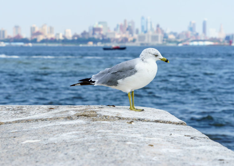 Close-up of bird perching against sea