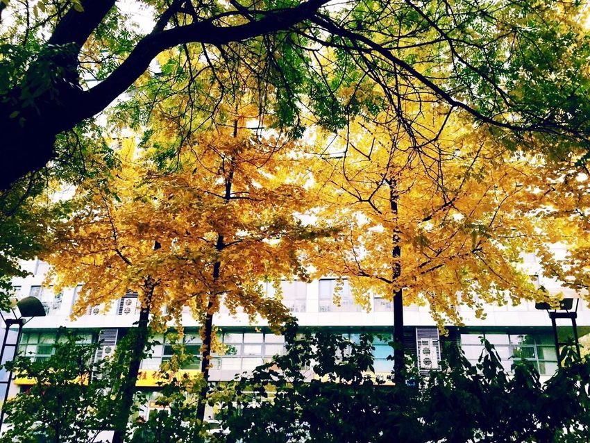 Autumn Tree Autumn Leaf Change Nature Day No People Outdoors Beauty In Nature Low Angle View Branch Growth Sunlight Built Structure Yellow Architecture Close-up Sky