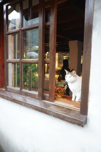Looking Aroundtheworld Taiwan Cat Village Travel Pets Domestic Domestic Animals Mammal Animal Themes Animal One Animal Cat Vertebrate Domestic Cat Feline No People Window Sitting Day Architecture Built Structure Transparent Glass - Material Building Exterior