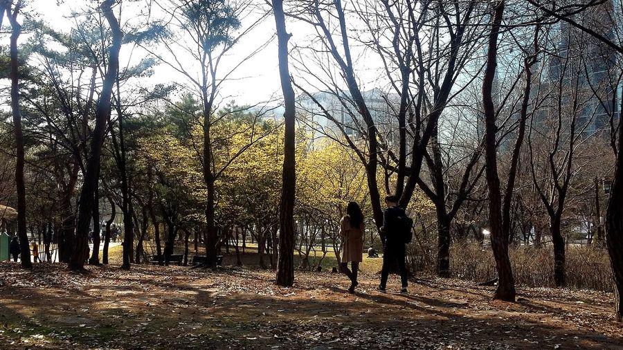 Seoul Spring Seoul Seoulspring2017 Yeouido Seoul_streetphotography Kr_streetphotography Streetphotography Southkorea